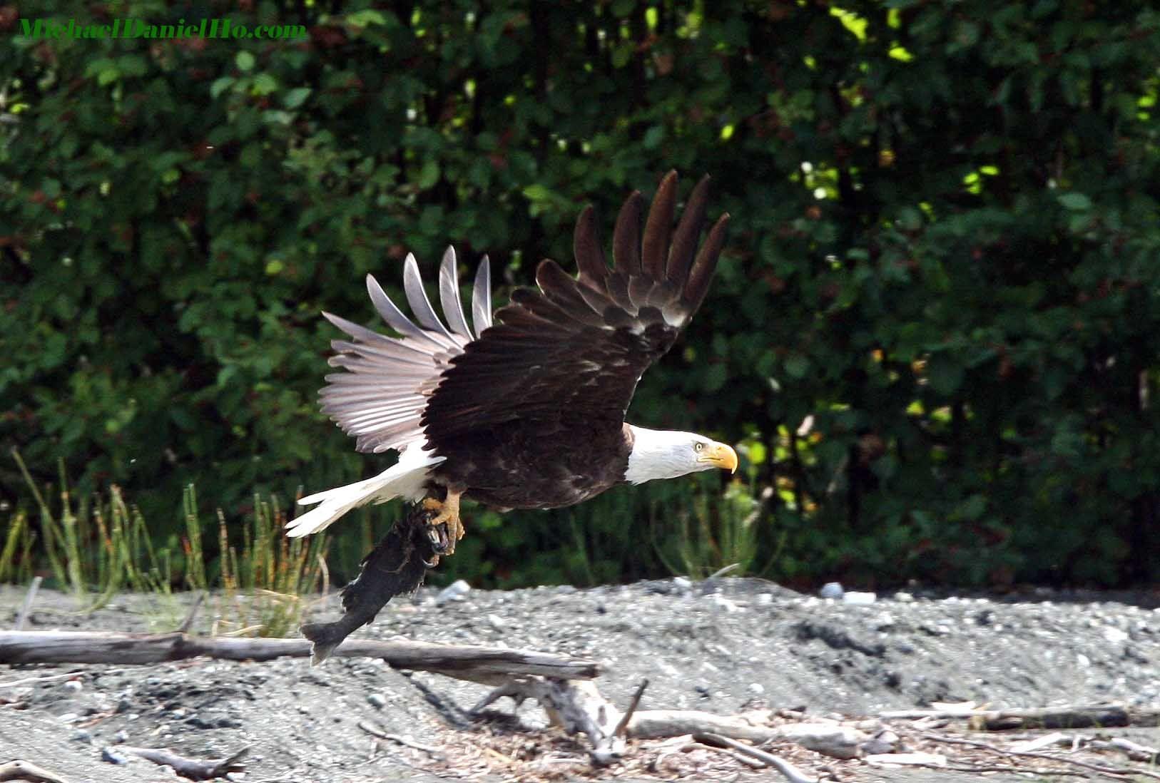 wildlife backgrounds related keywords - photo #6