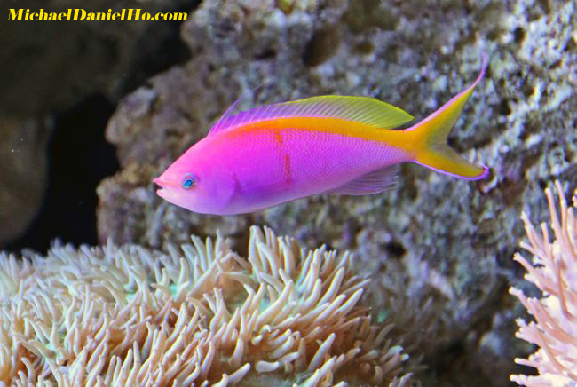 tropic fish - photo #17