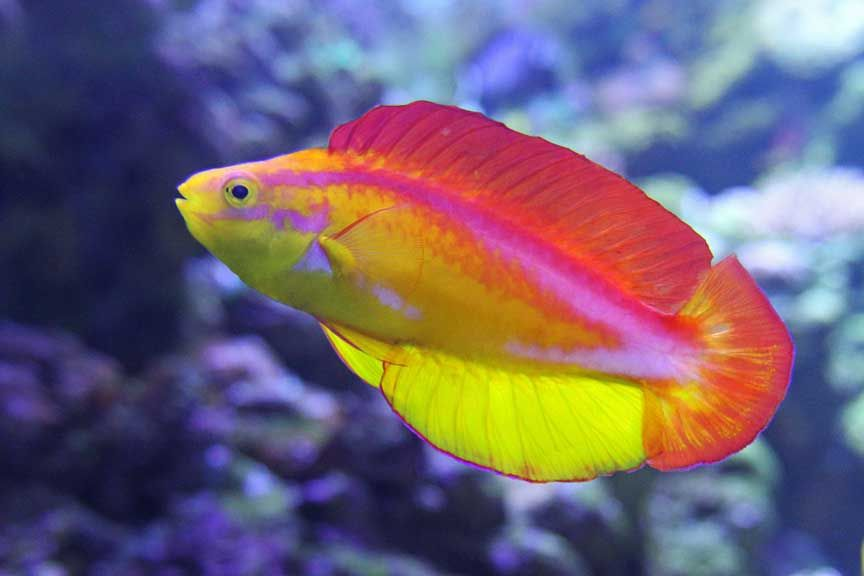 tropic fish - photo #34