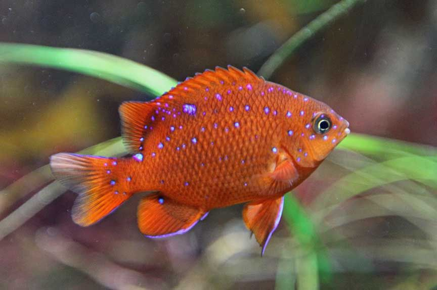Photo Collection Fish Photography Tropical