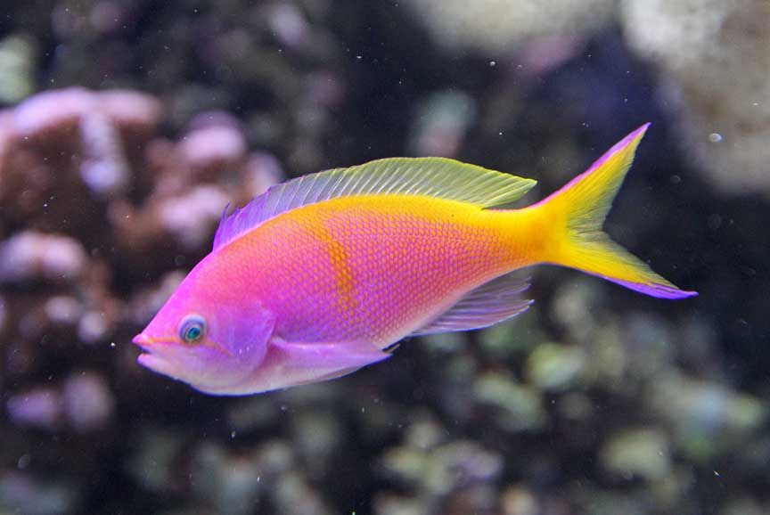 Tropical fish photos  ...