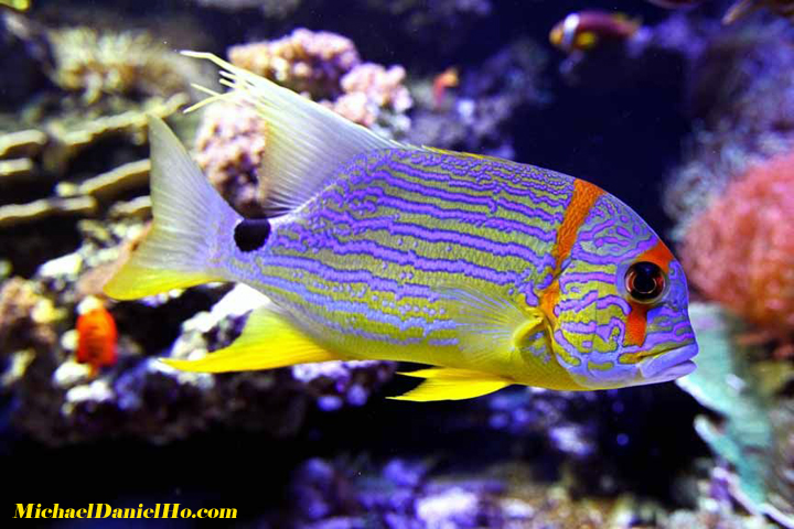 Fish Photography Tropical