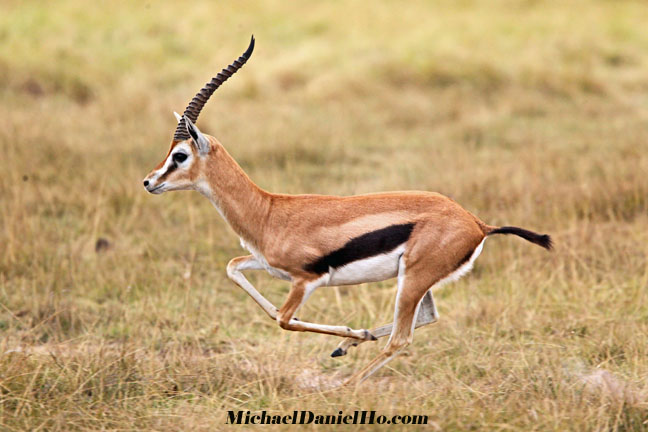photo of oryx in east africa