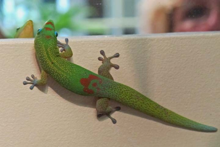 photo of gecko