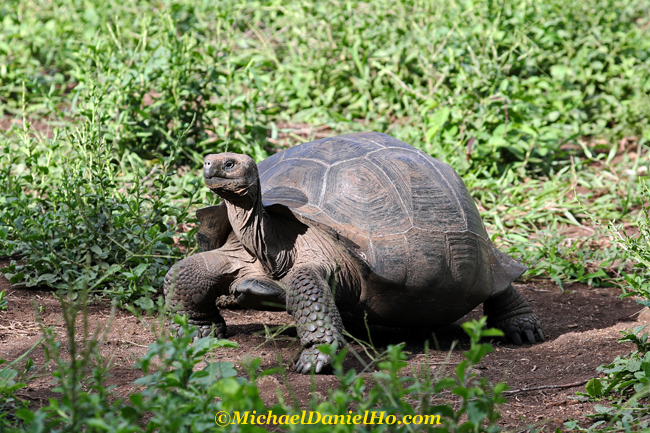 photo of giant tortoise in galapagos