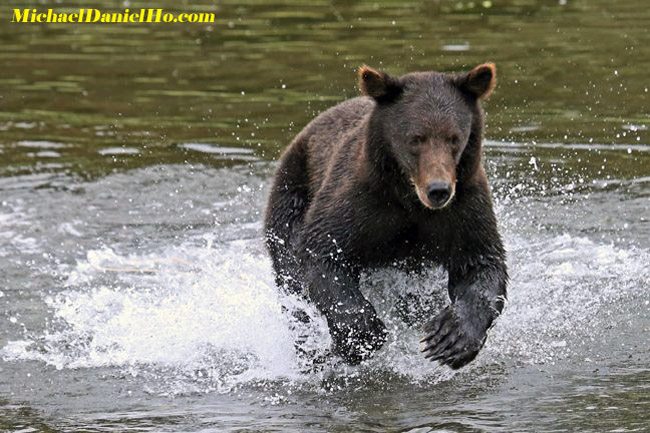 photo of Brown / grizzly bear