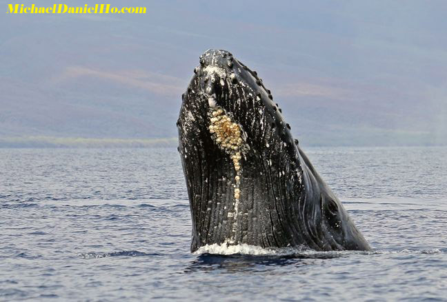 humpback whale photos
