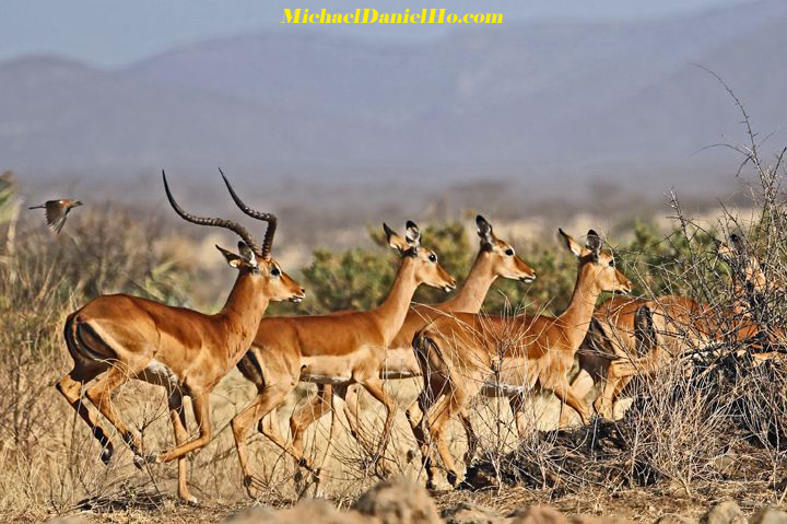 photo of impalas in east africa