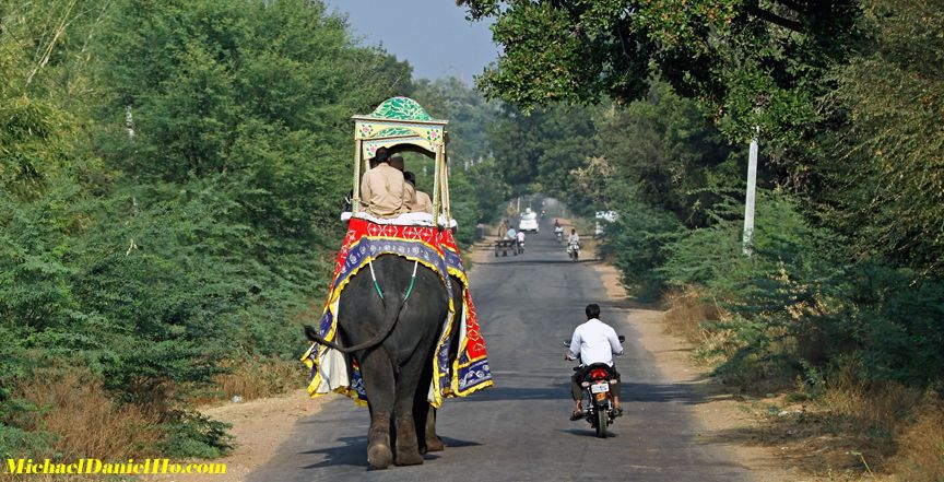 photo of Indian elephant, India