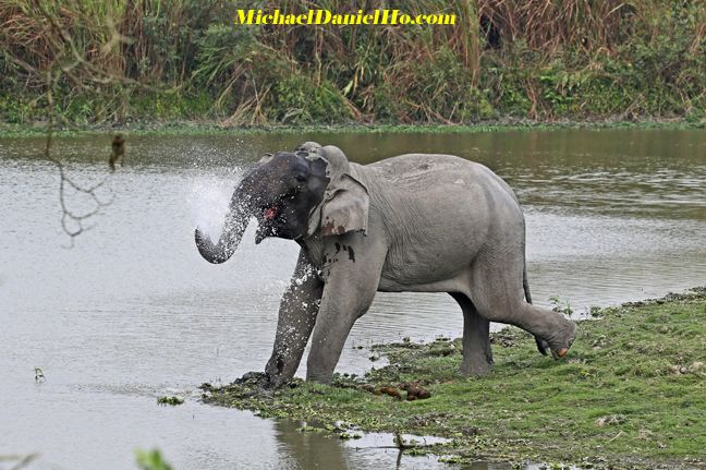indian elephant photo