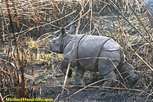photo of indian rhino