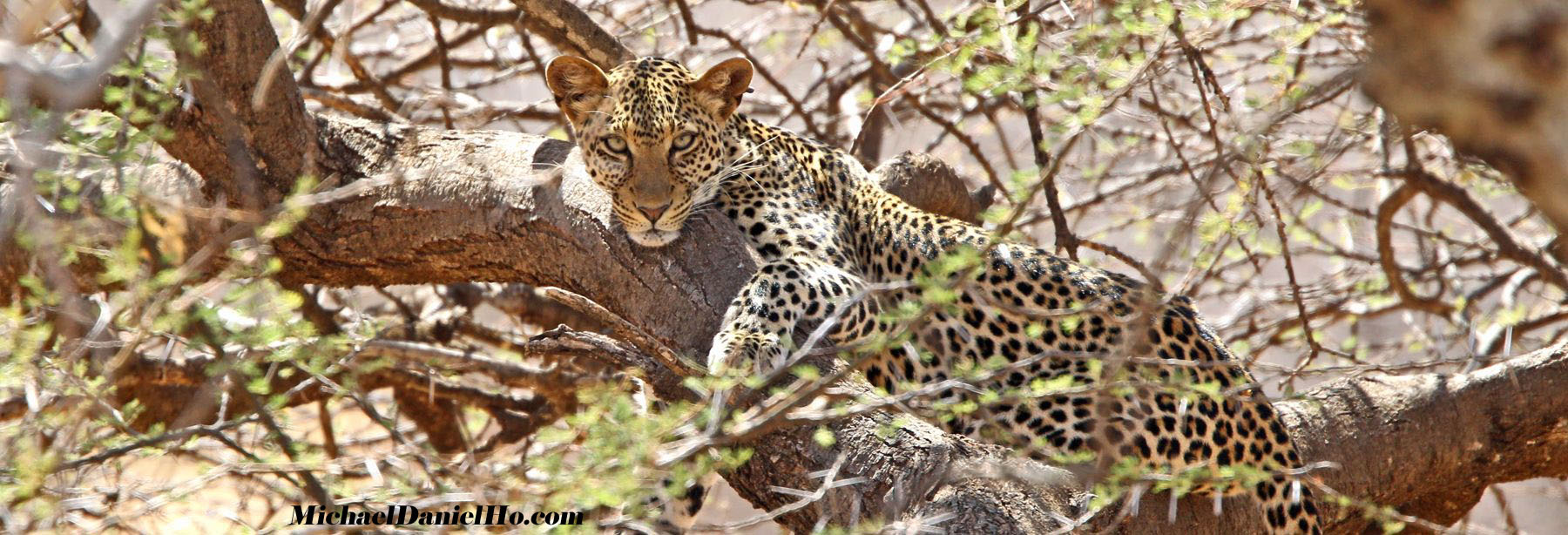 photo of Leopard in Maasai Mara
