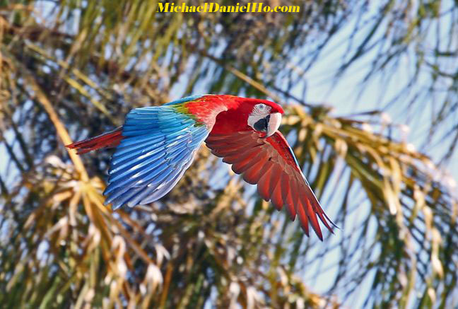 photo of Macaw