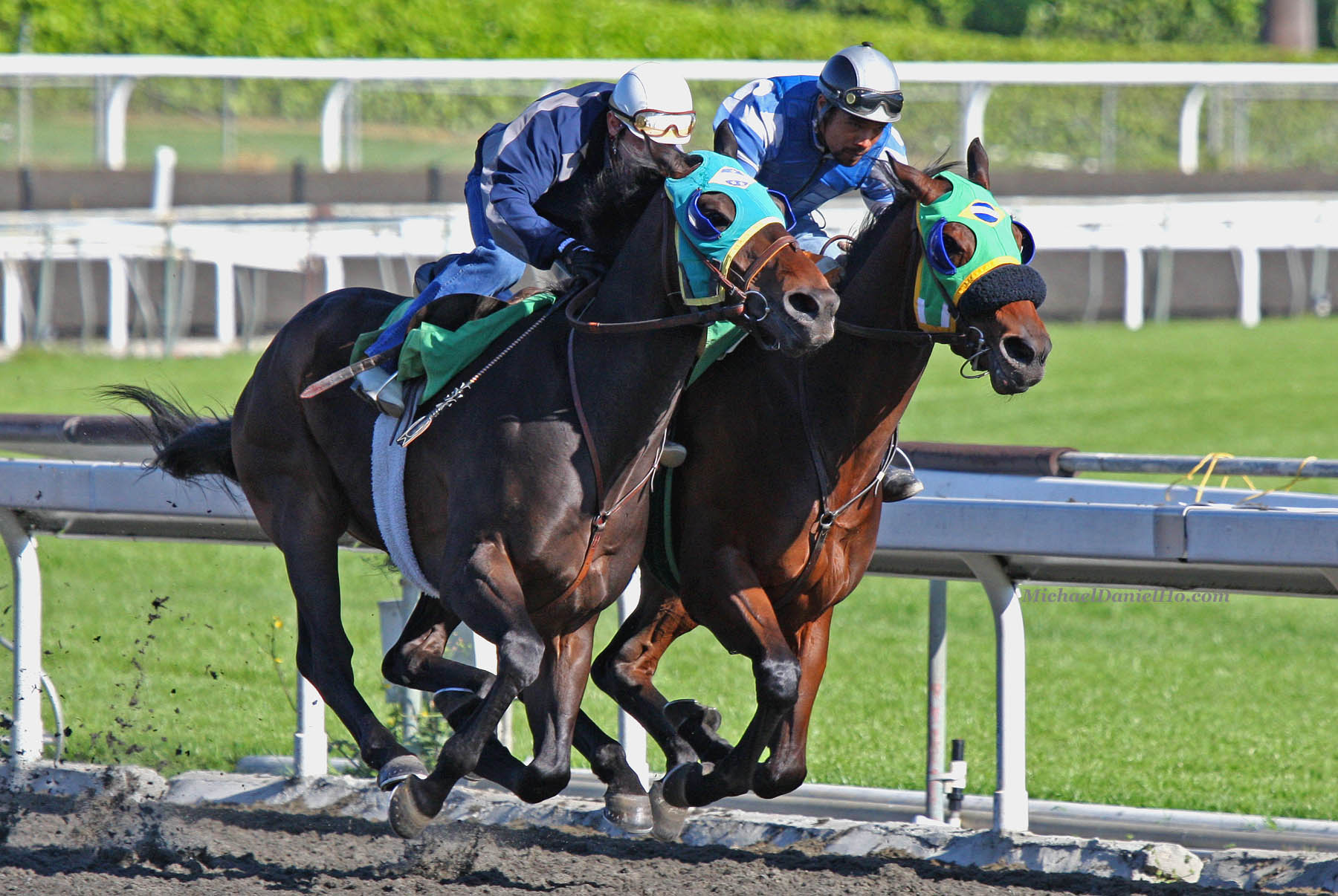 how to train a thoroughbred racehorse
