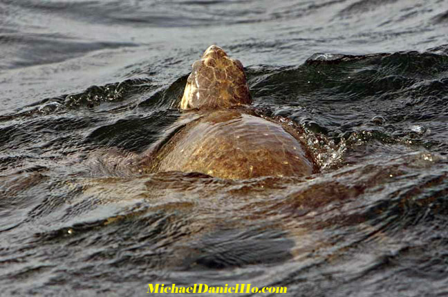 sea turtle photos