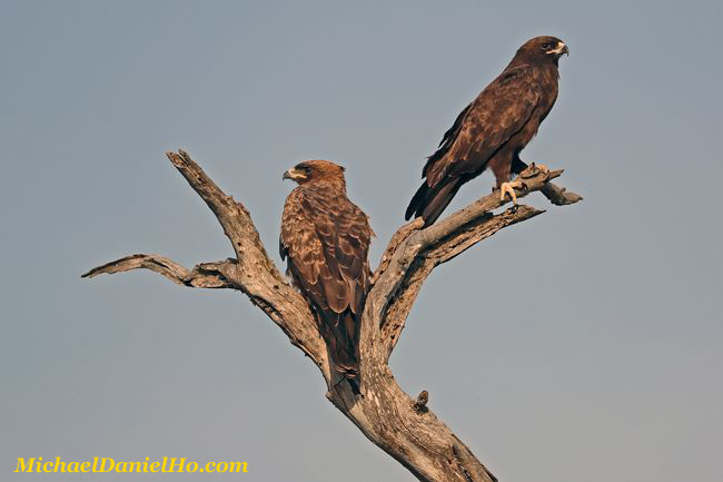 photo of Wahlberg Eagles in South Africa