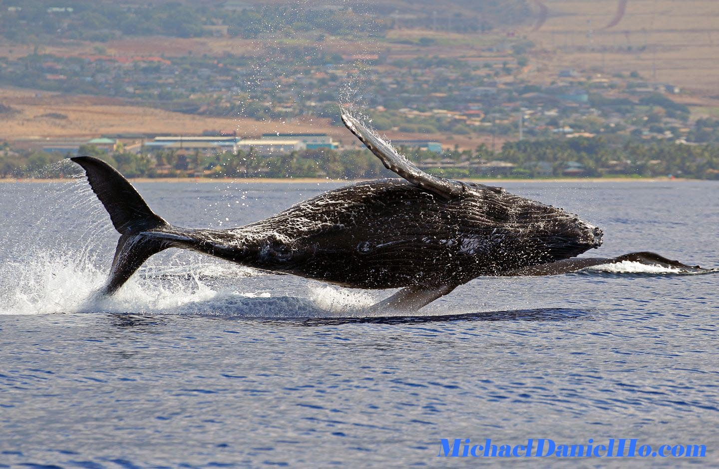 Humpback whale wallpapers